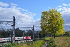 A train and a tree (kryshen) Tags: railroad autumn sky cloud tree grass clouds russia railway september tran petrozavodsk