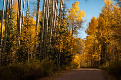 All That Glitters is Gold (Patrick.Russell) Tags: autumn trees sunset fall nature landscape outdoors gold nikon colorado outdoor co aspens cb crestedbutte d300 lifeoutdoors