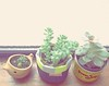 Cachefofys (Carol Grilo • FofysFactory®) Tags: plant planta brasil garden neon jardin carolgrilo jardim flowerpot vaso maceta cachepot fofysfactory cachepo cachefofys