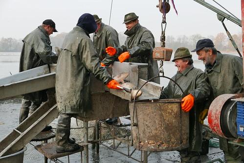Jistebnik - Pond Harvesting