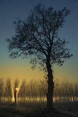 Quercia al tramonto (franco nadalin) Tags: tramonto natura giallo sole nebbia pioppi quercia