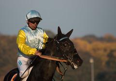 Réunion de Vincennes - 2 novembre 2015 (sebastienpeguillou) Tags: horse sport race cheval nikon course 300mm nikkor equestrian turf vincennes chevaux hippodrome hippique équitation d3200