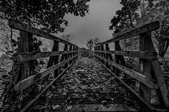 footbridgebw (Steve J Cottis) Tags: park trees lake water fog footbridge dartford tokina1116mm28 brooklandslake nikond5300