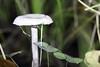 IMG_3181-Modifier (mycenium) Tags: wood mushroom canon belgium region foret brabant champignon bois 6d wallon wallonie wallone belgiquie