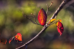 Autumn Light (Elizabeth_211) Tags: autumn fall nature leaves bokeh tennessee foilage jacksontn westtn sherielizabeth