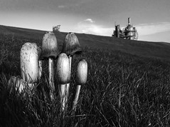 Mushrooms in Gas Works (margaretsextonpage) Tags: park blackandwhite bw nature grass mushrooms washington gasworkspark seatlle