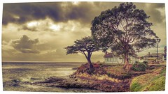 Santa Cruz (Muss0) Tags: california santacruz house plant tree beach photo sand outdoor border wave s5 musso samsug