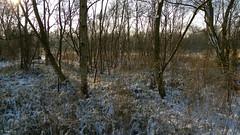 Landsmeer Ratteneiland (Ger Veuger) Tags: landschap landscape noordholland noordhollandslandschap dutchlandscape landsmeer ratteneiland winter sneeuw snow bomen trees hollandslicht dutchlight