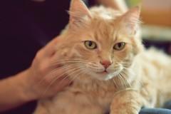Cat (elka.) Tags: cat kot gata chat neko gatta кошка котка katze γάτα pet кошки feline