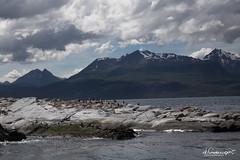 20161129-Argentina.Antarctica-92