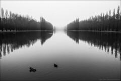 (Paucal) Tags: leica mm monochrom trielmar mate parc de sceaux brume myst mood darkness fog france