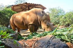 WKK_2956 (kongkham35@hotmail.com) Tags: nikond7000 nikon1685 nakhonratchasimazoo nakhonratchasima thailand