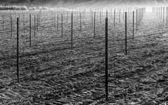 _DSC8068 (Giuseppe Cocchieri) Tags: bw blackwhite blackandwhite biancoenero bianconero monochrome countryside campagna lines linee light luce landscape paesaggio nero black bianco white
