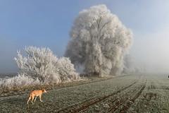 Rauhreif (Pixelkids) Tags: landschaft winterlandschaft bäume europa deutschland rauhreif winter bayern anton hund