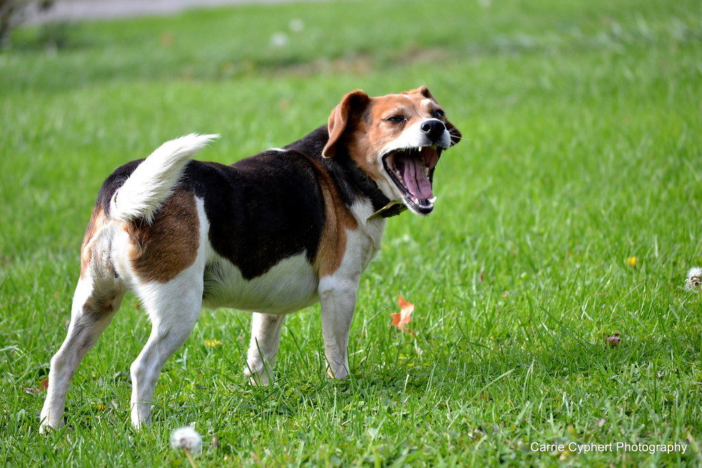 yawning research paper Good essays about failure is yawning contagious research paper vridhasadanam malayalam essay on discipline what is methodology in a dissertation quizlet.
