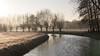 Swans and Willows (Theo Bauhuis) Tags: stream beek wilgen zwanen swans willow willows winter achterhoek