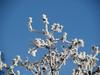 Im Reich der Schneekönigin (onnola) Tags: koblenz arzheim rheinlandpfalz deutschland rhinelandpalatinate germany winter schnee frost rauhreif snow pflanze stiel stängel eis eiskristall ice plant