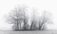 Trees (Jorden Esser) Tags: hoarfrost hss rijp sliderssunday trees white nederlandvandaag