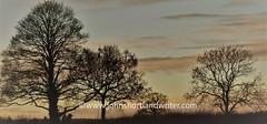 Dawn 2 (john shortland) Tags: trees clouds silhouette sky winter orange sunset lifeintheenglishcotswolds