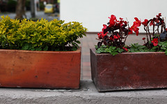 Jardinières | Planters | Materos (Eric Dupuis) Tags: eric dupuis ericdupuis éricdupuis photo photographie photography montreal quebec canada artiste artist photographe photographer artista foto fotografo fotografia plantes plants matas flores fleurs flowers materas jardinières planters bogotá colombia septembre september septiembre 2015