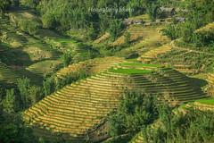 _J5K9161.San Sả Hồ.Sapa.Lào Cai (hoanglongphoto) Tags: asia asian vietnam northvietnam northwestvietnam landscape scenery vietnamlandscape vietnamscenery vietnamscene terraces terracedfields terracedfieldsinvietnam mountain flank defile sunlight sunny morning sunnymorning treehill homes house transplantingseason sowingseason canon canoneos1dsmarkiii tâybắc làocai sapa sansảhồ phongcảnh buổisáng nắng nắngsớm sườnnúi hẻmnúi ruộngbậcthang đổnước mùacấy ruộngbậcthangsapa đồicây nhà nhữngngôinhà canonef70200mmf28lisiiusmlens