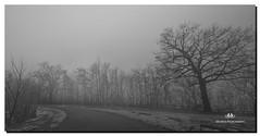 JANUARY 2017-020363-2-22 (Nick and Karen Munroe) Tags: fog foggy misty mist greyhaze haze blackandwhite brampton blackwhite bw bandw monochrome shadows shadowy trees tree nikon nickmunroe nature nikond750 nikon1424f28 nickandkarenmunroe nickandkaren karenick23 karenick karenandnickmunroe karenmunroe karenandnick munroedesignsphotography munroedesigns munroephotography munroe ontario outdoors canada