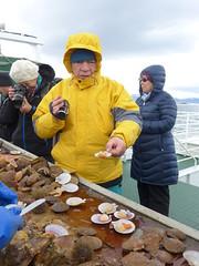 Viking Sushi boat tour at Breiafjrur bay (Oren & Shimrit) Tags: sea rock iceland ducks viking urchin eider shags formations basalt stykkishlmur snfellsnes fulmars kittiwakes baldur breiafjrur  scalopps sushipuffin