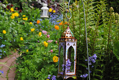 May in the Garden (Mark Wordy) Tags: flowers bluebells spring lamps ferns mygarden welshpoppies markwordy