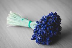 lavender (fntik) Tags: flower nature flora purple lavender