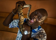 Benin, West Africa, Ouidah, man putting a snake in his mouth inside the python temple (Eric Lafforgue) Tags: africa travel people color male men history horizontal danger photography shrine day adult reptile snake wildlife religion westafrica python benin spirituality cultures voodoo oneperson ouidah headandshoulders vodun placeofworship vodoun voudou traveldestinations famousplace locallandmark onemanonly animalthemes whydah colourimage africanethnicity 1people africanculture vodon  vudun  oneadultonly   benin03359 ajud