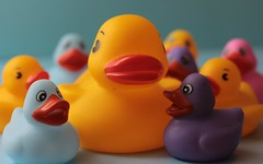 Big & Little (catherine4077) Tags: colors ducks rubberducky inside rubberducks biglittle