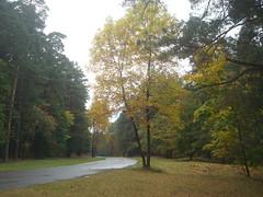 Mežaparks (Ievinya) Tags: park autumn trees fall forest parks forestpark koki rudens mezaparks mežs mežaparks mezhaparks
