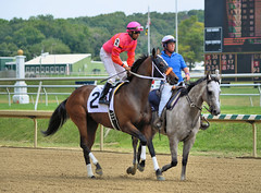 "2015-08-23 (46) r2 Julian Pimentel on #2 Sunday Sonnet (JLeeFleenor) Tags: photos photography md marylandhorseracing laurelpark jockey جُوكِي ""赛马骑师"" jinete ""競馬騎手"" dżokej jocheu คนขี่ม้าแข่ง jóquei žokej kilparatsastaja rennreiter fantino ""경마 기수"" жокей jokey người horses thoroughbreds equine equestrian cheval cavalo cavallo cavall caballo pferd paard perd hevonen hest hestur cal kon konj beygir capall ceffyl cuddy yarraman faras alogo soos kuda uma pfeerd koin حصان кон 马 häst άλογο סוס घोड़ा 馬 koń лошадь outside maryland"