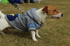 """Dogs, dog park, richmond • <a style=""""font-size:0.8em;"""" href=""""http://www.flickr.com/photos/31682982@N03/21902792603/"""" target=""""_blank"""">View on Flickr</a>"""