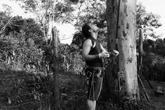 Alpinista de rvores (renanluna) Tags: blackandwhite bw man tree fuji br sopaulo monochromatic pb rope sp fujifilm climber 55 rvore homem pretoebranco monocromia 011 corda x100 alpinista renanluna fujifilmfinepixx100