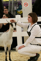 RAWF15 JSteadman 0101 (RoyalPhotographyTeam) Tags: sun royal goat 2015 rawf nov08
