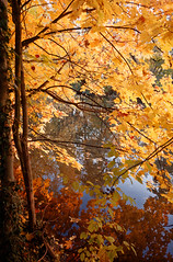 Goldener Oktober / Golden October (Alexomat) Tags: oktober herbst apsc ricohgrii