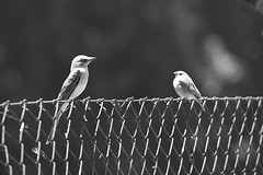 La mirada (Wagner Cardia) Tags: birds brasil rs petrobras cepe esteio