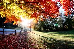Autumn (Benny2006) Tags: park morning autumn shadow color tree fall leaves sunrise leaf maple positive beams sunray readgreen