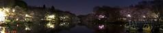 Hanami Night Panorama (bomb.strike) Tags: japan sakura hanami
