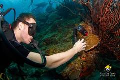 slu_bradh_V55A6093542 (kaufmankronicle) Tags: 2016 diving kidsseacamp stlucia