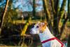 D75_5385.jpg (phil_tonic) Tags: dog animal hund ferddy jackrussell terrier blackandwhite action shot food hunter