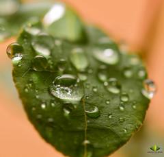 Wassertropfen Makro (Argentarius85) Tags: nikon d5300 sigma makro 105mm macro water wasser waterdrops
