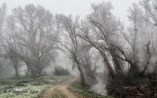 Under the mist