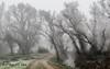 Under the mist (F.Guirado) Tags: 2017 enero lleida torresdesegre paisaje mist niebla landscape wow tree canon 7dmkii 7dmk2 canon24mmstm 24mm invierno winter cold frost escarcha