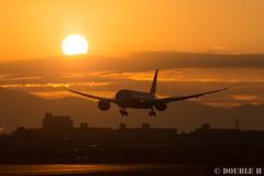 Itami Sky Park 2017.1.1 (11) JA810A / ANA's B787-8 (double-h) Tags: eos6d ef300mmf28lisiiusm rjoo itm osakaairport itamiairport 大阪空港 伊丹空港 airplane 飛行機 伊丹スカイパーク itamiskypark ja810a ana 全日空 b787 b7878 dreamliner