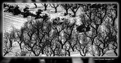 Arbres nus en la neu (Bare trees in snow) Caudiel, l'Alt Palància, Castelló, Spain (Rafel Ferrandis) Tags: arbre neu paisatge bn minimalista eos5dmkii ef100400mmf4556lii hdr
