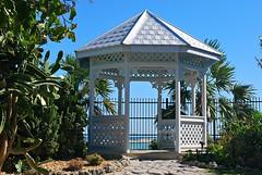 Key West (Florida) Trip 2016 0045Rif 4x6 (edgarandron - Busy!) Tags: florida keys floridakeys keywest higgsbeach keywestgardenclub