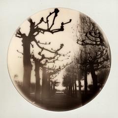 (Martin PEREZ 68) Tags: agen lotetgaronne aquitaine polaroid polaroid635cl 635cl impossibleproject impossible instant instantané instantfilmbw bw600 roundframe platane arbres trees