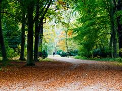 Tiergarten Berlin (jim2302) Tags: tiergarten berlin tree autumn october 2016 olympus olympusomdem5ii colours leafs fall orange green yellow walk city